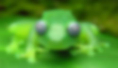 【閲覧注意】 新種のカエルがヤバイと話題!! こういう奴ドラクエで見た気がするwwwww