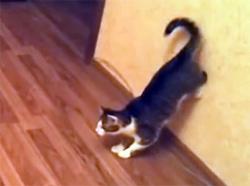 壁に後ろ足をつけてからーのー!猫