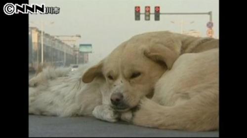 死んだ犬を守るかのように寄り添う犬が話題 埋葬しようとしてもそばを離れず