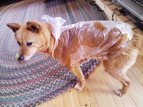 カッパ被ってる犬wwwww