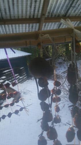 家の干し柿が野生のネズミに盗まれてる