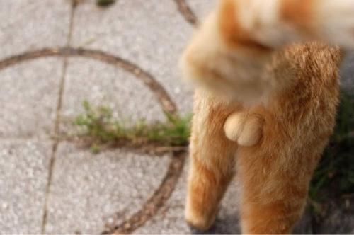 本日のネコのにゃんたまスレ