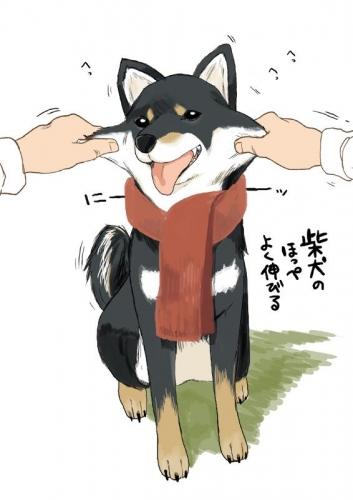 【画像】 「柴犬のほっぺはよく伸びる」 → 本当かどうか試してみたら可愛すぎたwwwwwwwww