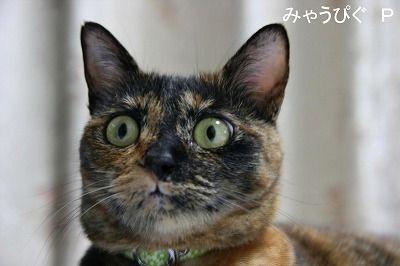 【朗報】NHK会長「慰安婦は当時どの国にもあった。日本だけ叩くのは筋違い」