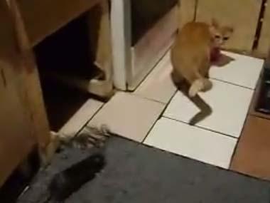 ネコが台所にいる → 後ろからそっとネズミが近づく → 結果