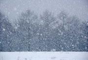 大雪でもパチ屋に行くバカ