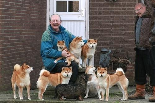 ベネルクス3国で日本犬がブーム 「空気が読め、しつけが入りやすく、主人思い」