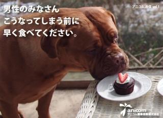 【モテモテなお前ら】チョコをもらったらすぐ食べて! 2月は犬猫のチョコレート誤飲が急増