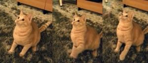 おもちゃを高速で動かしてみたら、猫の方も急加速。その微振動感が容赦なくかわいい