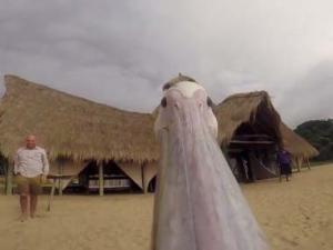 ペリカンの「くちばし」に カメラを付ける → 空を飛んだらこんな映像が撮れました!