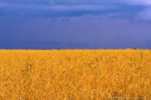 ウクライナで何が起きているか分かりやすく教える!ロシアが悪いの?EUが悪いの?