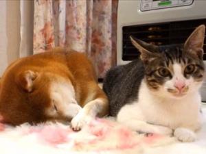 ネコと犬が 朝起きたらストーブの前で一緒にあったまる → 犬が二度寝しちゃうw