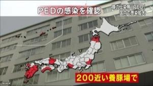 豚の伝染病拡大 4万頭近く死ぬ 12の県で wwwwwwwwwwwww