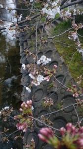 桜がたくさん咲いてるな(※画像あり)