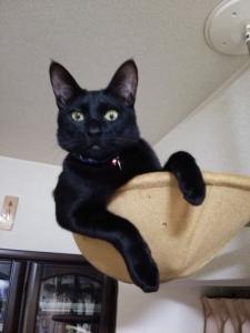 猫『で、相談事ってなんだい?』