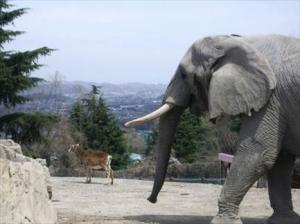 コンビニでアフリカ象を買う時にありがちなこと