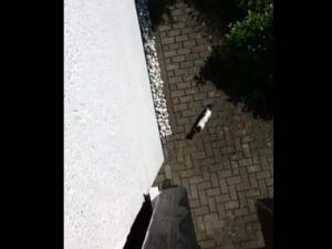 うちのネコが 散歩から帰ってくる → それを私が2階のバルコニーから見ていたら・・・