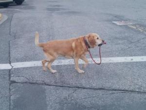 散歩したがる犬を放置しまくった結果がクソワロタwwwwww(画像)