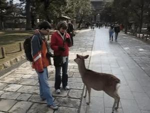外国人「日本の鹿だしお辞儀もするよ」奈良にいるお辞儀をするシカが話題に【海外反応】
