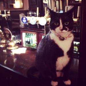 一杯いかがですか?ようこそ猫のいるBARに