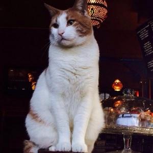 カフェ と 猫  猫好きにとって極上の空間だよな