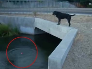 うちのイヌが 橋の上から川にボールを落とす → 飛び込んで取ってくる → 繰り返す