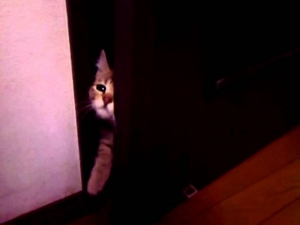 【閲覧注意】半開きのドアの怖さは異常