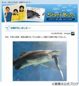 """水族館でサメがサメをガブリ、茨城県大洗水族館が""""事件""""を報告。"""