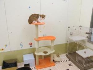 岐阜県が「保健所で収容した犬猫の譲渡を行う動物愛護センター」をオープン