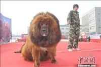 【画像】世界 最強の犬wwwwwwwwwwwwwww