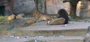 観光客がゴミを投げ入れる→動物園の動物が死亡―中国
