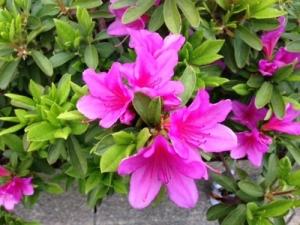 ガキの頃道端に生えてるピンクの花から蜜吸ってた奴wwwwww