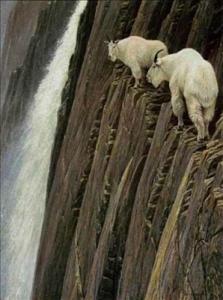 【画像】頭オカシイww山羊って無茶しすぎだろwwwwwwwwwwwwwwwwwww