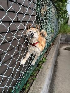 「近所の家の犬。 挟まっててんけど。笑」→愛護集団からボコボコに