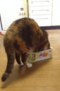 【悲報】 箱が狭くて入れず、ちょっとイライラしてるッ!!!
